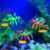Rồng biển trang trí bể cá leafy sea dragon glowing