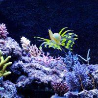 Ốc sên biển phát sáng trang trí bể cá Snail Glowing