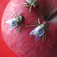 5 Con ruồi giả dành cho người thích đùa