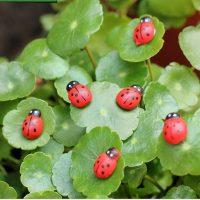 10 con bọ mini phụ kiện trang trí tiểu cảnh terrarium