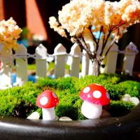 10 cây nấm đỏ mini phụ kiện trang trí tiểu cảnh terrarium