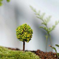 Cây bonsai tròn mini style 4 phụ kiện trang trí tiểu cảnh terrarium