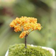 Cây nhựa mini style 7 phụ kiện trang trí tiểu cảnh terrarium