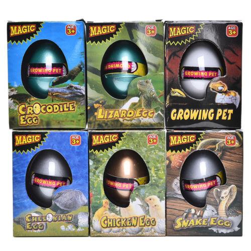 Trứng Thần Kì Nở Trong Nước Động Vật Bò Sát Thằn lằn Cá Sấu Rùa