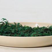 10g Rêu tiểu cảnh bonsai phụ kiện trang trí Terrarium