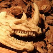 Sọ Tê Giác Rhino Terrarium Aquarium Trang Trí Bể Cá