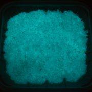 5g cát dạ quang phát sáng mạnh vào ban đêm tạo hiệu ứng đẹp mắt