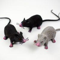 Con chuột giả dành cho người thích đùa