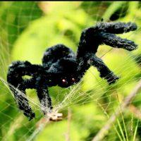 Con nhện giả trang trí tiệc halloween cosplay