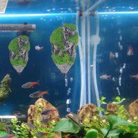 Đá nhân tạo phủ rêu xanh trang trí bể cá stone moss aquarium độc đáo
