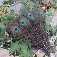 Lông chim công khổng tước màu sắc tự nhiên 40-50 cm