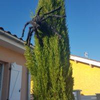 Con nhện giả 75 cm trang trí tiệc halloween cosplay