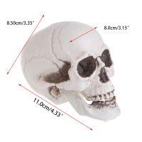 Đầu Lâu Sọ Người Trang Trí Tiệc Halloween COSPLAY HÙ DỌA