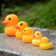 Gia đình 5 vịt vàng bóp kêu mini Shrilling duck