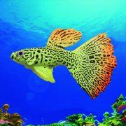 Cá bảy màu trang trí bể cá hiệu ứng ánh sáng UV tuyệt đẹp