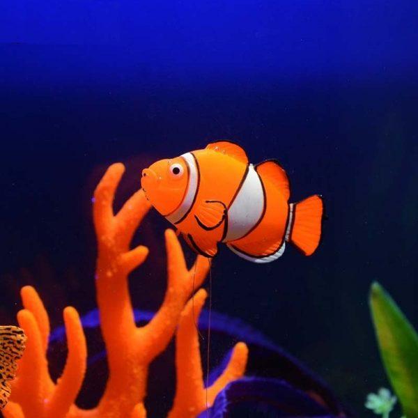 Cá Nemo trang trí bể cá hiệu ứng phát sáng
