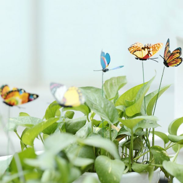 Bươm Bướm 3d trang trí tiểu cảnh cây bonsai cắm hoa