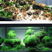 Keo dán rêu thủy sinh có thể dán dưới nước